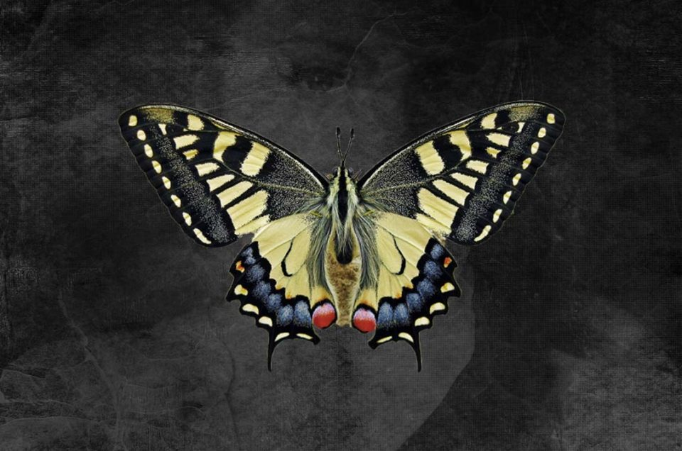 Story of the butterfly